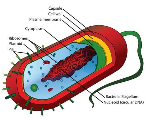 Struktur Dan Karakteristik Sel Prokariotik Tentorku