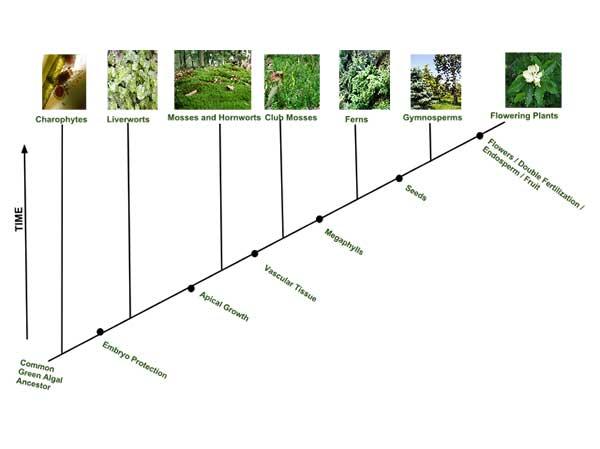 Ciri-ciri khusus berkembang seiring dengan evolusi tumbuhan, seperti ...